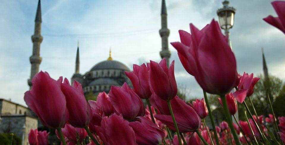 Laleta-Istanbul